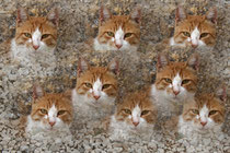6 Katermontage/Tom cat montage