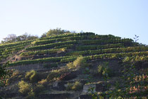 126 Weingebirge im Herbst/Mountains with vine in autumn