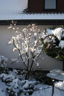 49 Baum/Shrub
