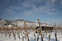 18 Weinfelder mit Schnee/Fields with vine in snow