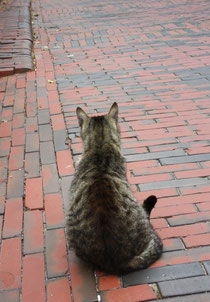 63 Eine Hauskatze in Greetsiel/A cat in Greetsiel