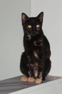6 Eine Katze aus Griechenland/A cat from greece