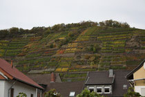 131 Weingebirge im Herbst/Mountains with vine in autumn