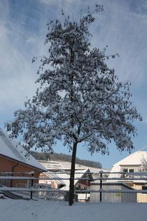 35 Baum/Tree