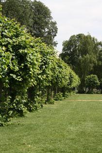 108 Gärten und Anlagen/Gardens and plants