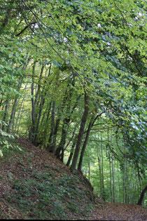 26 Waldweg/Forest track