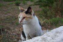 61 Katze beobachtet/Cat observes