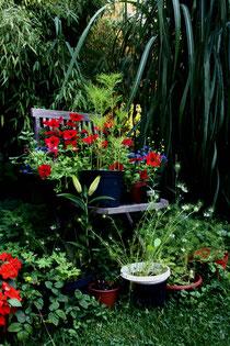 7 Stilleben im Garten/Still life in a garden