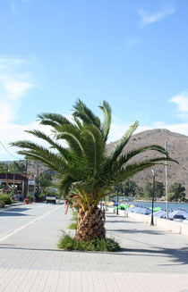 176 Palme/Palm tree