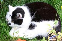 13 Katze im Schlaf/Cat sleeping