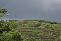 122 Weingebirge/Mountains with vine