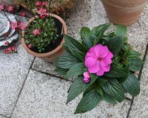 194 Blumen im Töpfen/Flowers in pots