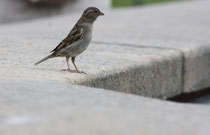 192 Spatz/Sparrow