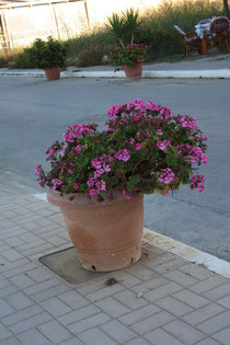 139 Blumen in Griechenland/Flowers in Greece