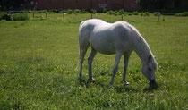 6 Pferd auf einer Weide/Horse on a meadow