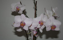 147 Orchidee/Orchidee