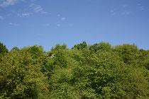 185 Bäume/Trees