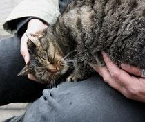 7 Katze schust/Cat smooch