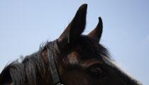 18 Pferdeauge/ Horse eye