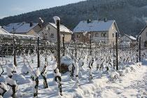 59 Wein im Schnee/Vine in snow