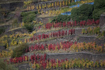 140 Weingebirge im Herbst/Mountains with vine in autumn