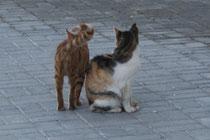 78 Katzen/Cats
