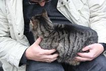 15 Katze/Cat