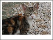 3 Katze/Cat