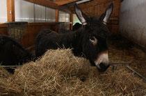 67 Esel/Donkey