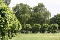 107 Gärten und Anlagen/Gardens and plants