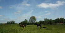 5 Pferde/Horses