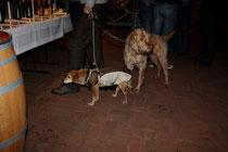 73 Hunde/Dogs