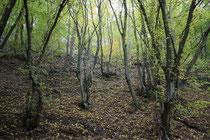 25 Der Wald/The forest
