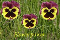 18 Flowerpower