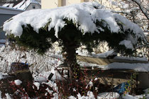 79 Baum/Tree