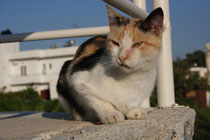25 Katze in der Sonne/Cat in the sun
