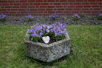 187 Blumen im Garten/Flowers in a garden