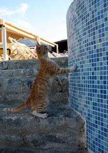 85 Eine kleine Katze/A little cat