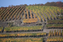 155 Weingebirge im Herbst/Mountains with vine in autumn
