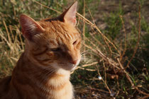 35 Kater in der Sonne/Tomcat in the sun