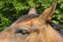 2 Pferdauge/Horse eye