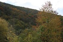 132 Wald im Herbst/Forest in autumn