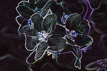 11 Leuchtende Kirschblüte/Luminous blossom