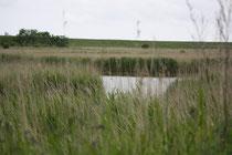 139 See/Lake