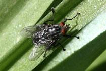 24 Eine Fliege/A Fly