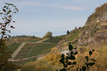 144 Weingebirge im Herbst/Mountains with vine in autumn