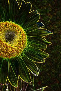 1 Leuchtende Sonnenblume/Luminous sunflower