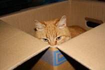 2 Kater in der Box/Cat in the box