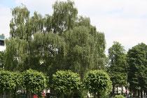 114 Gärten und Anlagen/Gardens and plants