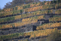 163 Weingebirge im Herbst/Moutains with vine in autumn